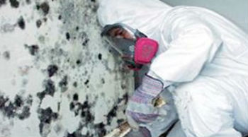 mold inspection and remediation servicemaster by wright